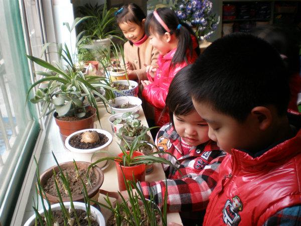 通过观察植物的生长过程