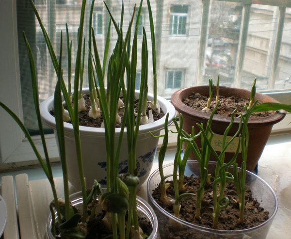 心--大西幼的小小植物角
