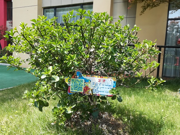 市委机关幼儿园四里河畔分园制作了一批名画树铭牌.